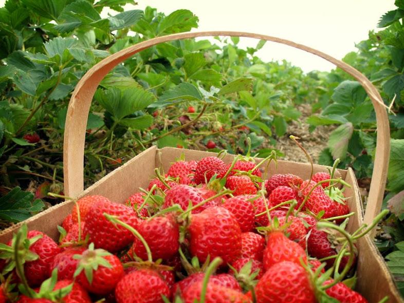 tempat wisata favorit di puncak - sweetberry agrowisata