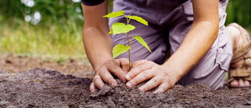 5 Cara Sederhana Untuk Mencintai Bumi Kita