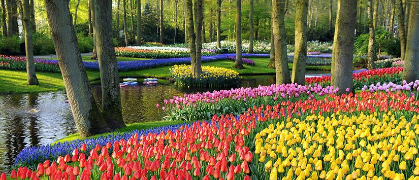 Unduh 7000 Wallpaper Bunga Terindah  Terbaik