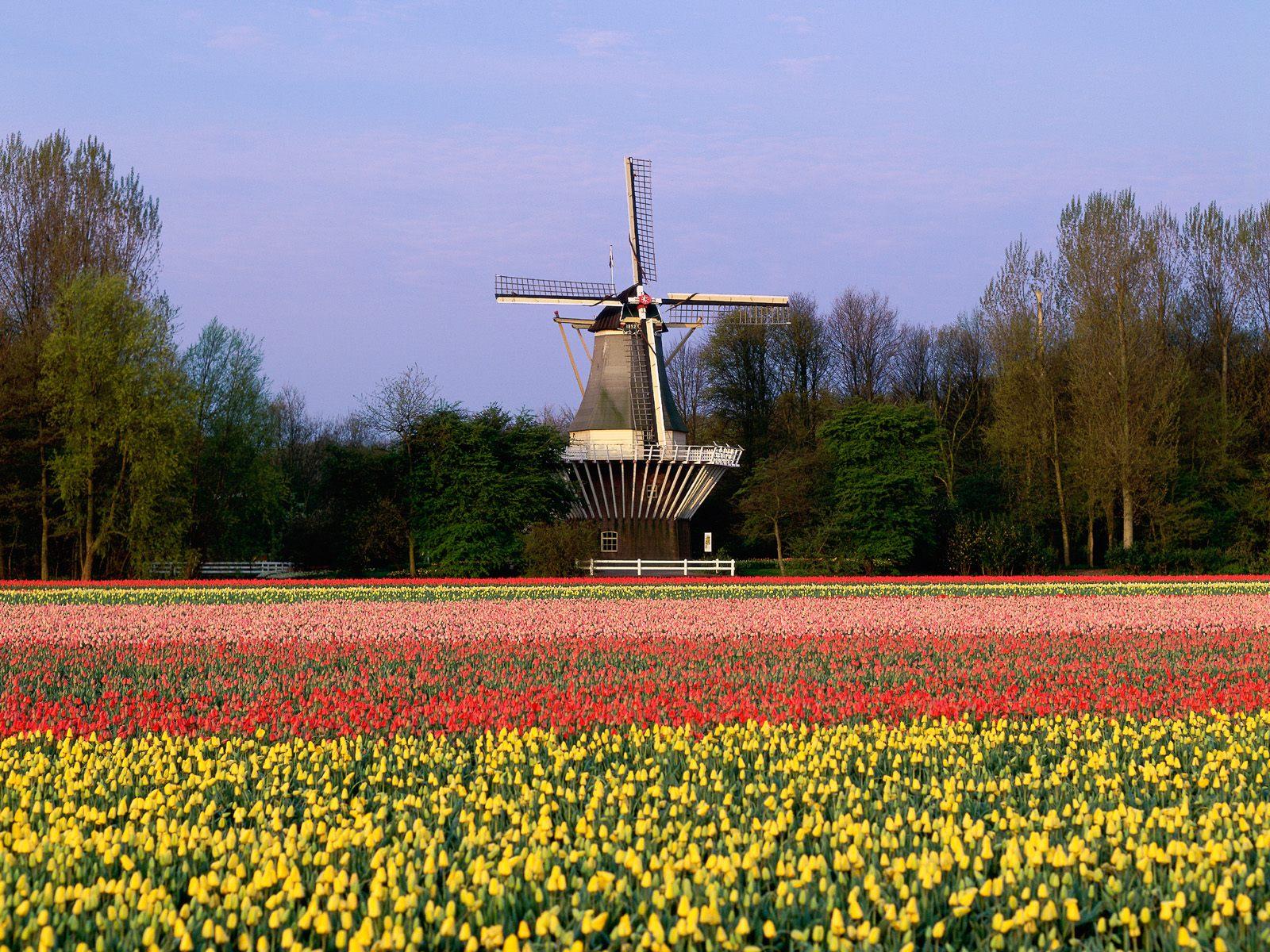 Wow! 4 Taman Bunga Ini Punya Keindahan yang Menakjubkan