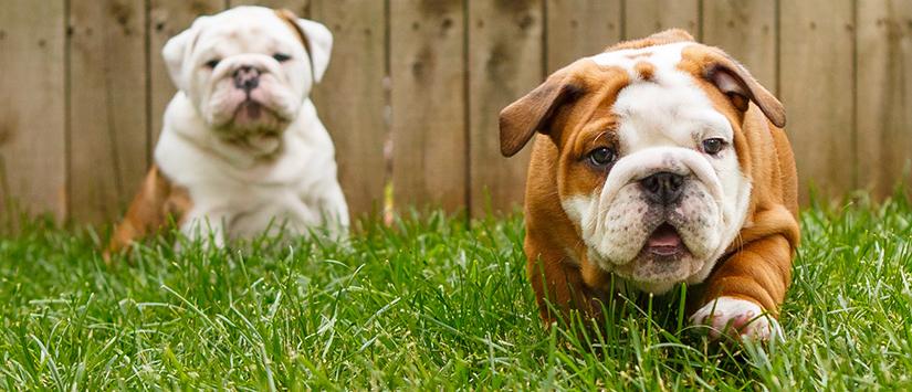 Cara Jitu Merawat Anjing Peliharaan Berdasarkan Jenisnya