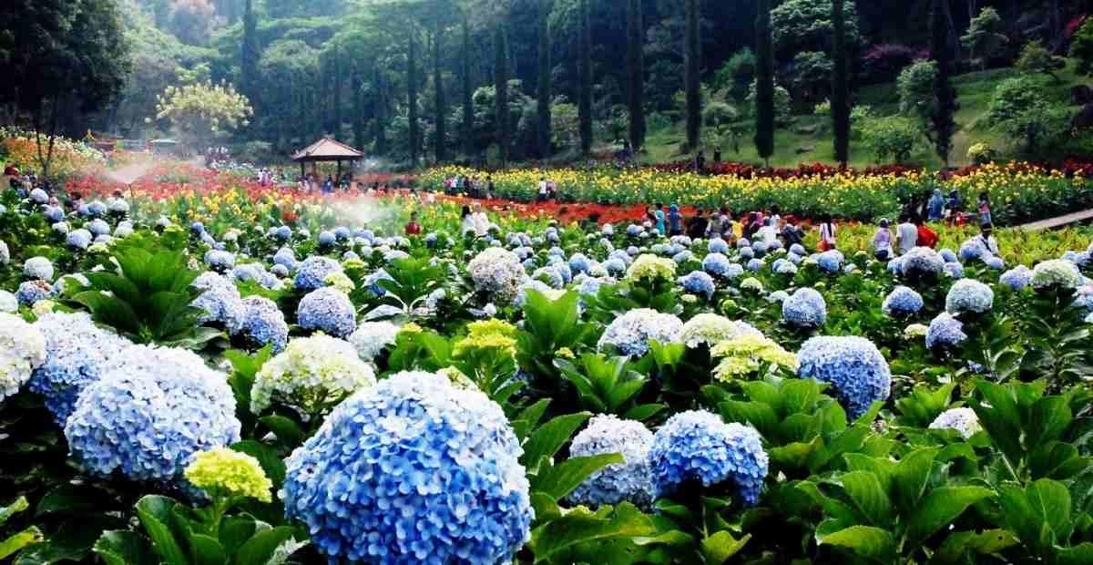 10 Tempat Wisata di Kota Malang Terbaik dengan Sensasi Berbeda
