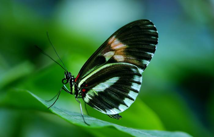 tempat wisata bali - taman kupu-kupu