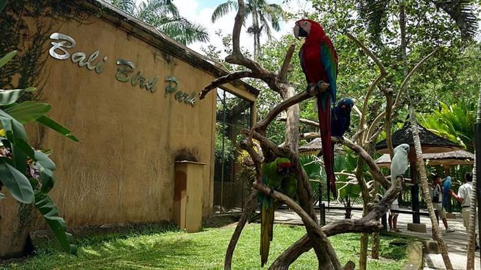 tempat wisata bali bird park