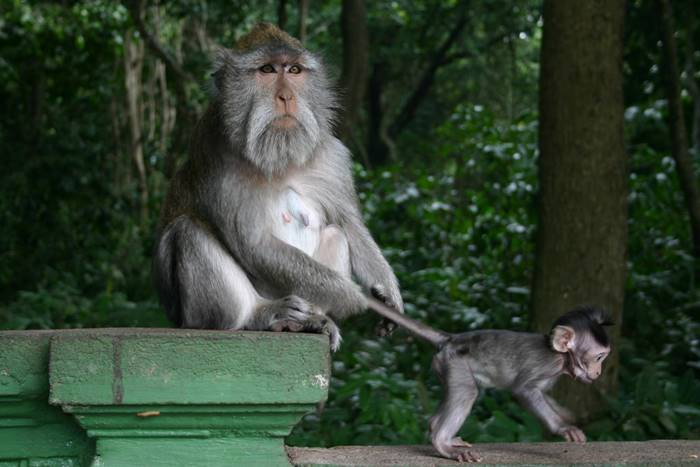 tempat wisata bali - mongkey forest