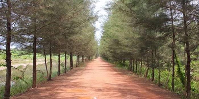 wisata bangka - botanical garden