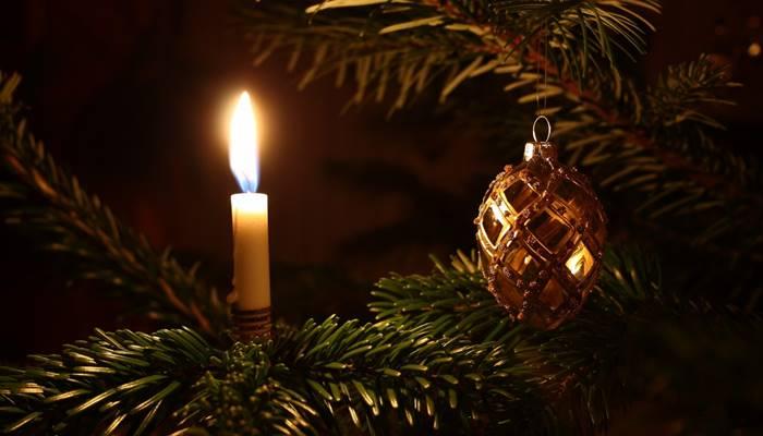sejarah dan fakta pohon natall