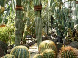 15 Jenis Kaktus Cantik Yang Mudah Dirawat