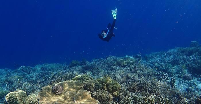 Tempat Snorkeling Tempat Snorkeling