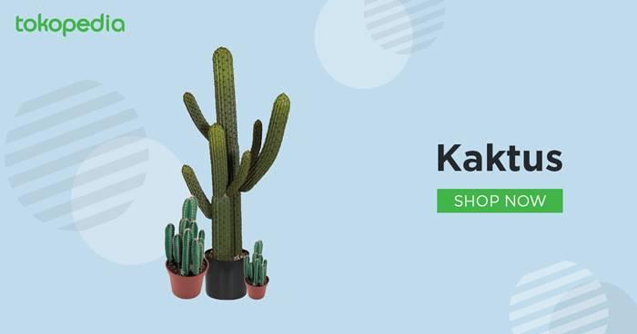5 Jenis Kaktus Untuk Pencinta Tanaman Hias Tokopedia Blog