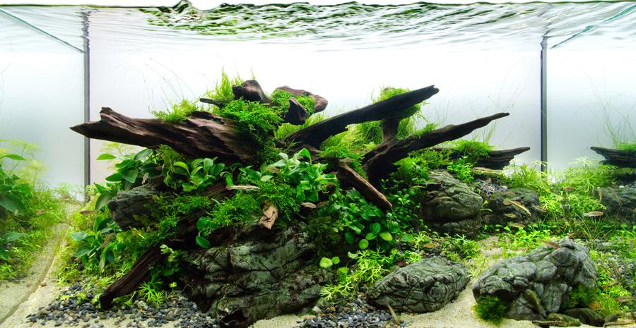 7 Cara Memulai Aquarium Aquascape Untuk Pemula Tokopedia Blog