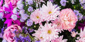 macam-macam bunga dan maknanya