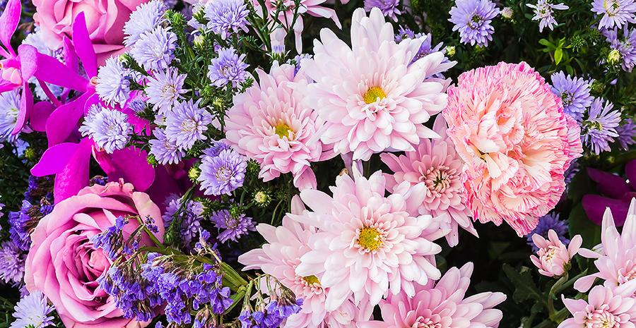 Macam Macam Bunga Dan Maknanya Untuk Pacarmu Tokopedia Blog