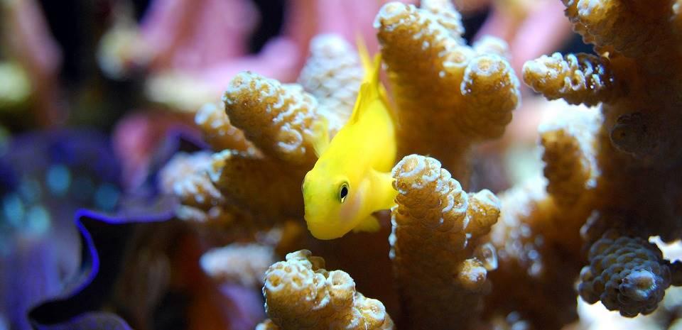 Tips Cara Membuat Akuarium Air Laut Untuk Pemula Tokopedia Blog