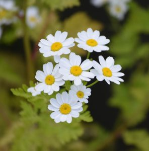 12 Macam Macam Bunga Dan Maknanya Untuk Orang Spesial