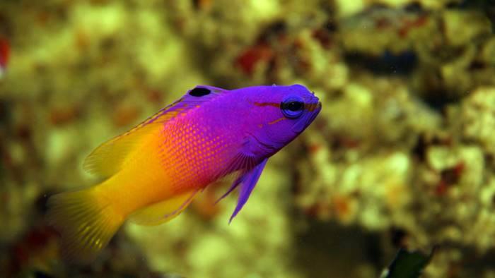 Download 80+ Gambar Aquarium Ikan Hias Laut Terbaru