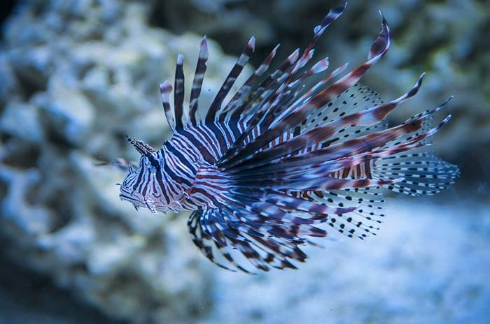 Contoh Kliping Ikan Hias