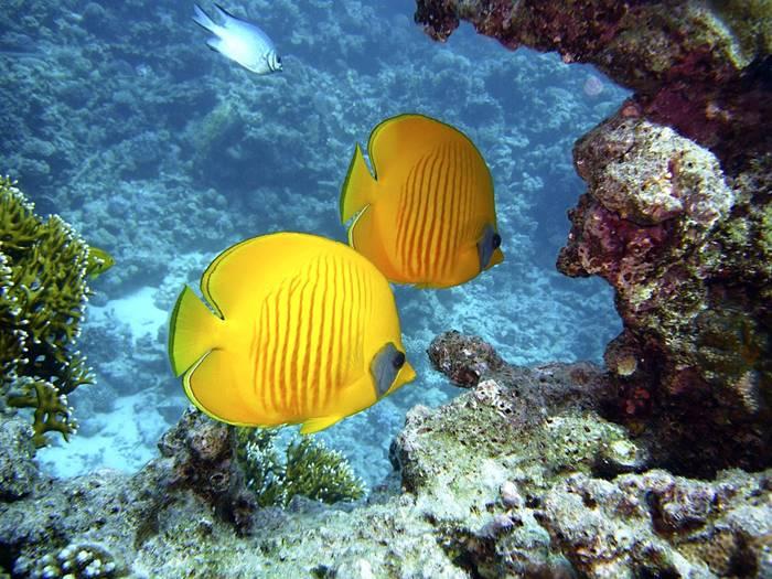 12 Ikan Hias Air Laut Yang Mudah Dipelihara Tokopedia Blog