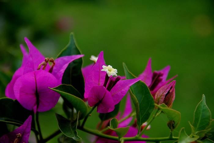 8 Jenis Tanaman Hias Pembawa Keberuntungan Di Rumah Tokopedia Blog