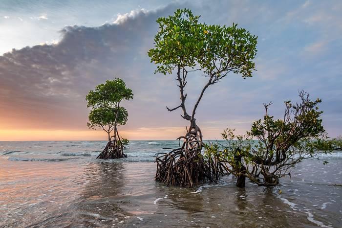 7 Kegiatan Menarik yang Bisa Dilakukan di Karimun Jawa - Menjelajahi Hutan Mangrove
