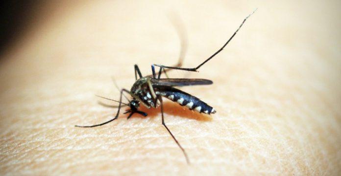 Obat Nyamuk Bakar