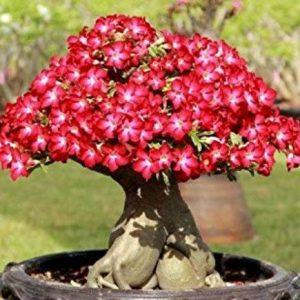 jenis tanaman bonsai terbaik