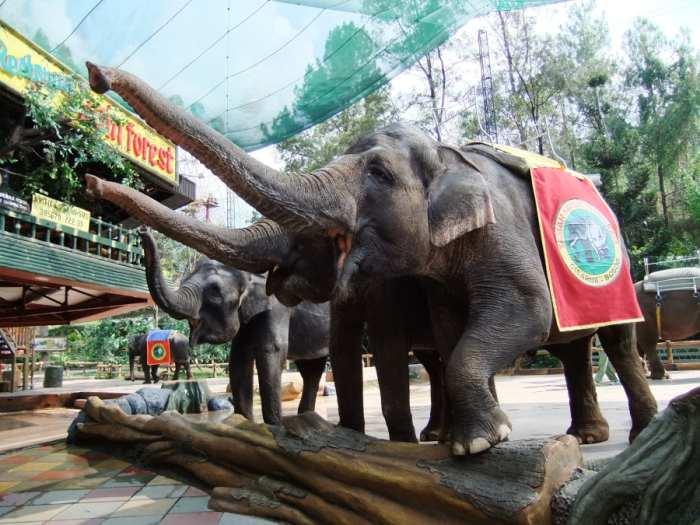 Wisata Safari di Bogor Puncak