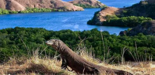 Wisata Pulau di Nusa Tenggara Barat