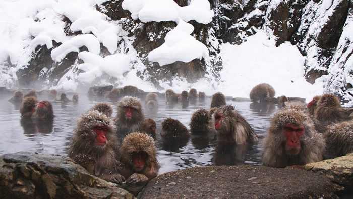 Destinasi wisata di Jepang terbaik