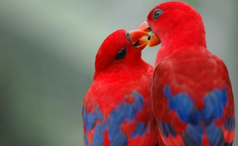 macam macam burung lovebird