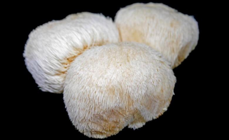 jenis / macam jamur yang bisa dimakan