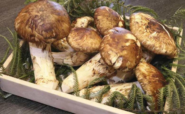 jenis jamur yang bisa dimakan