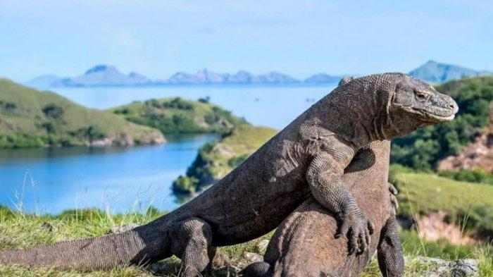 95 Gambar Hewan Nasional Di Asia Tenggara HD Terbaru
