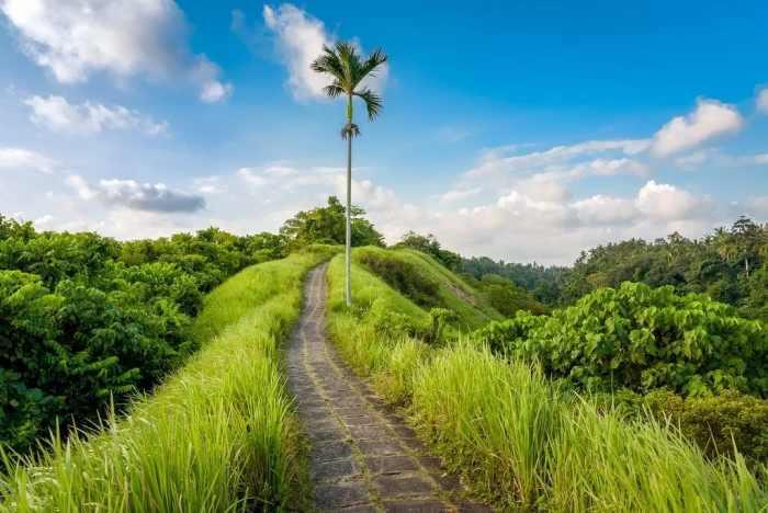 15 Tempat Wisata Di Ubud Pilihan Terbaik Tokopedia Blog