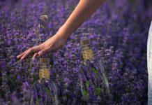 manfaat lavender, manfaat bunga lavender, manfaat tanaman lavender