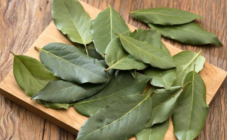 manfaat daun salam untuk obat diabetes dari