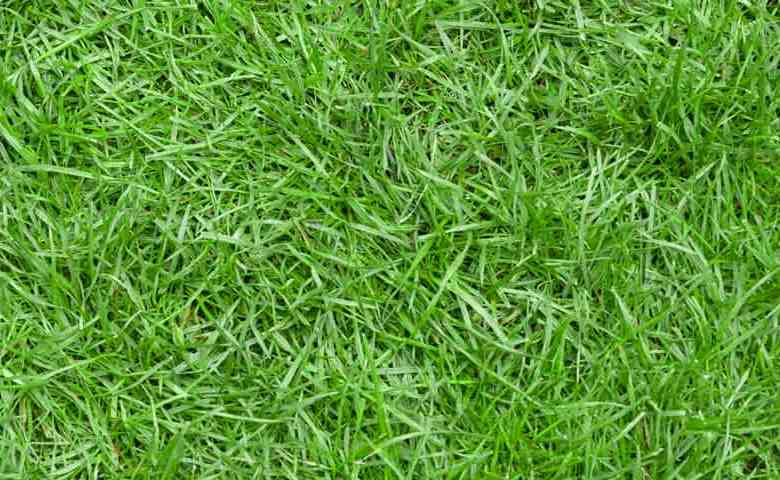 Image result for rumput