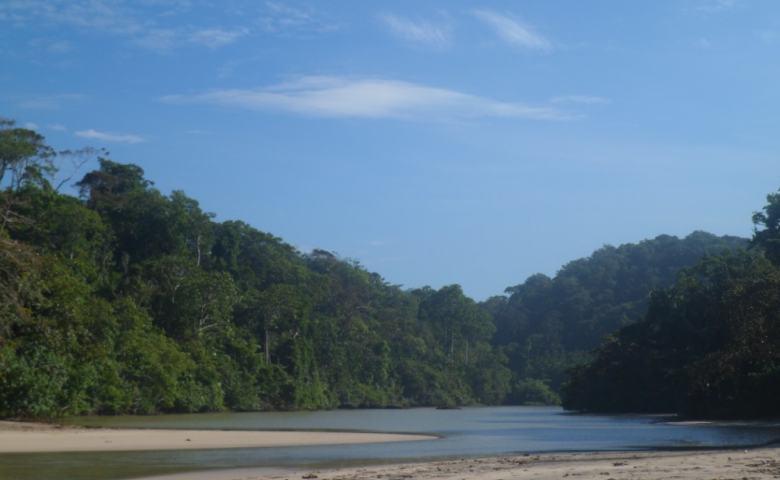 tempat wisata garut Leuweung Sancang
