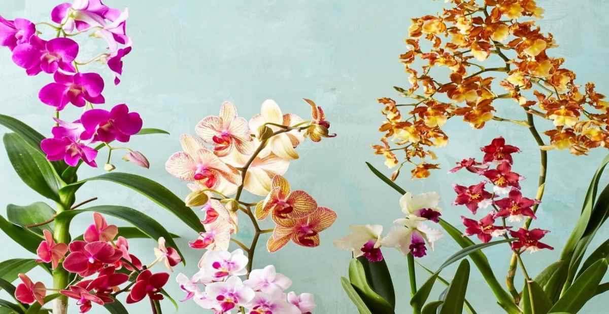 11 Jenis Tanaman Hias Bunga Cantik Untuk Indoor Dan Outdoor