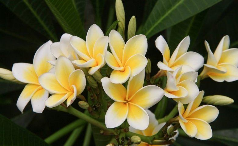 jenis tanaman hias bunga
