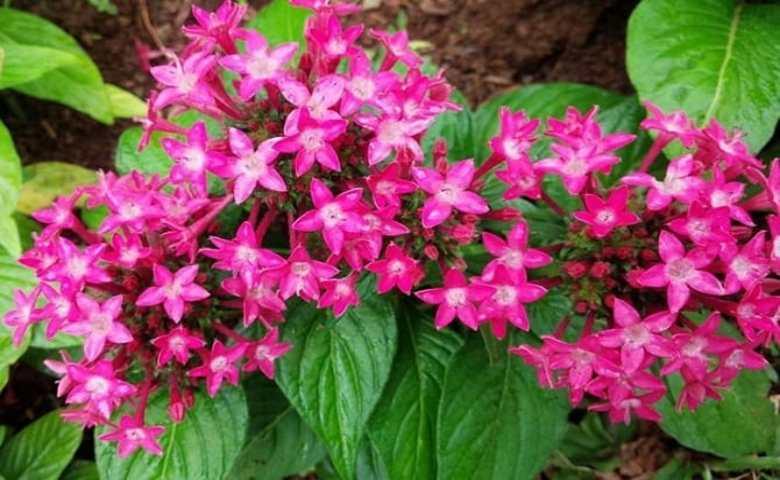 jenis tanaman hias bunga outdoor