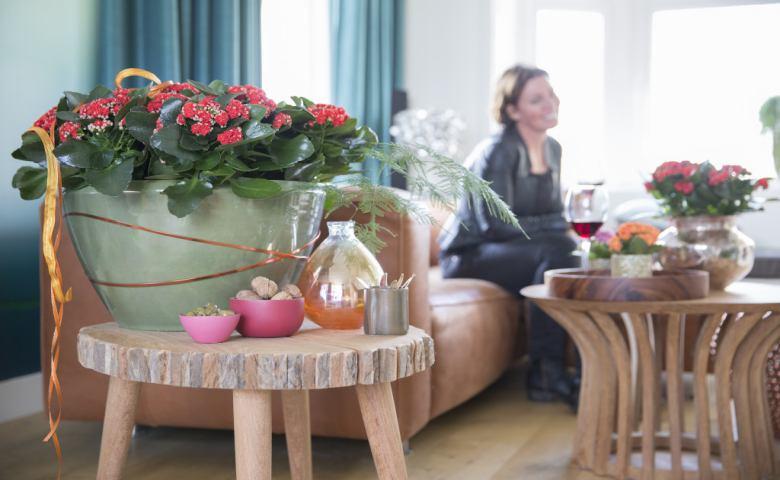 tanaman hias bunga indoor