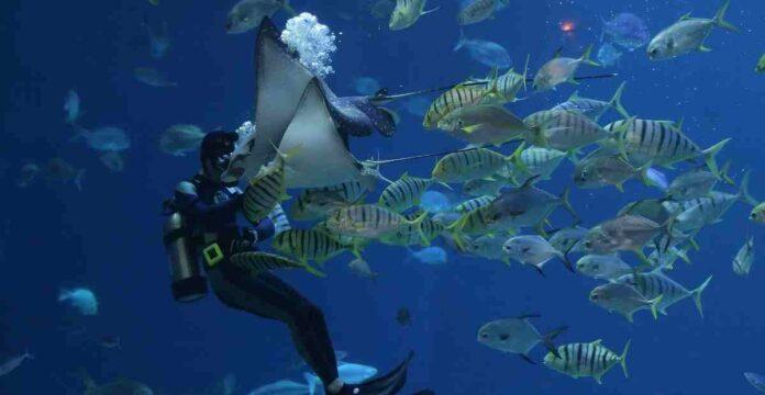 jakarta aquarium vs seaworld