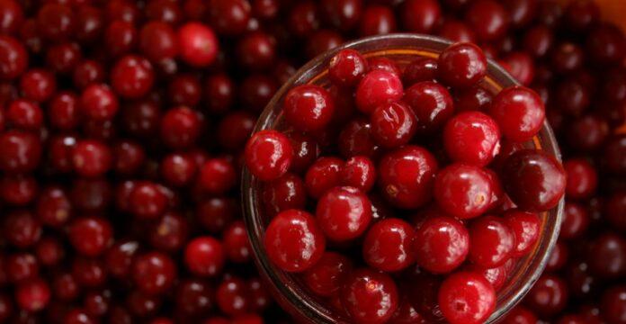 cranberry, buah cranberry
