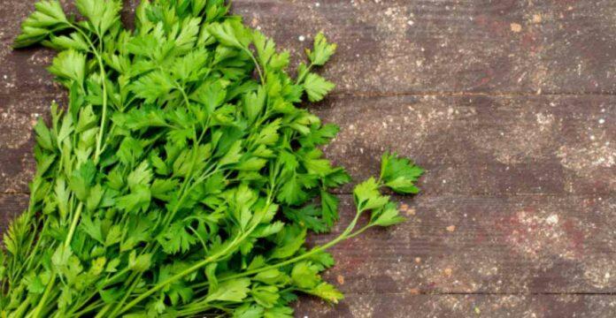 parsley, peterseli