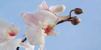 5 Cara Menanam Bunga Anggrek
