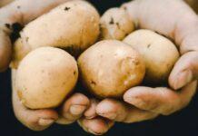 kentang, manfaat kentang