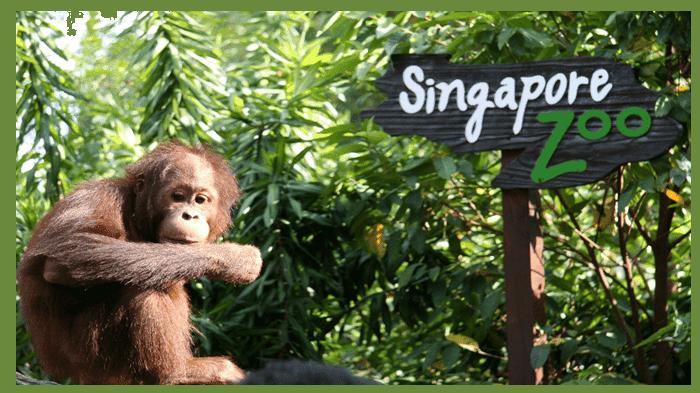 Singapore Zoo - Background