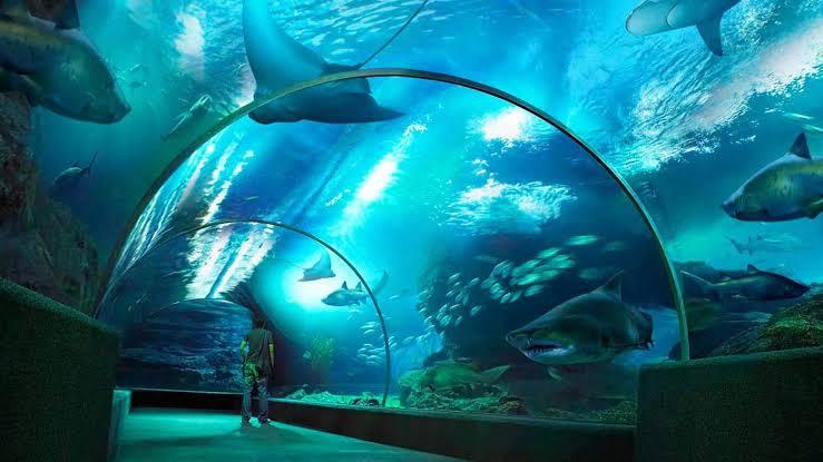 SEA LIFE Bangkok Ocean World - Background