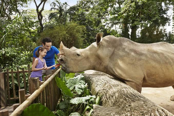 Singapore Zoo Ticket - Background